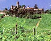 Piedmont-Langhe