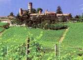 Langhe Countryside - Piedmont